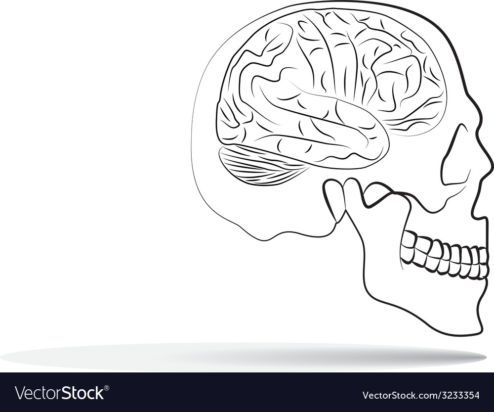 Skull with brain vector | Price: 1 Credit (USD $1)