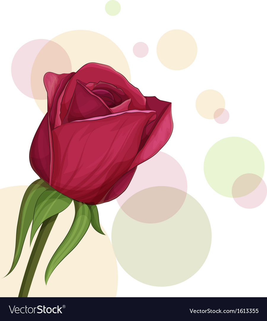 Burgundy roses vector | Price: 1 Credit (USD $1)