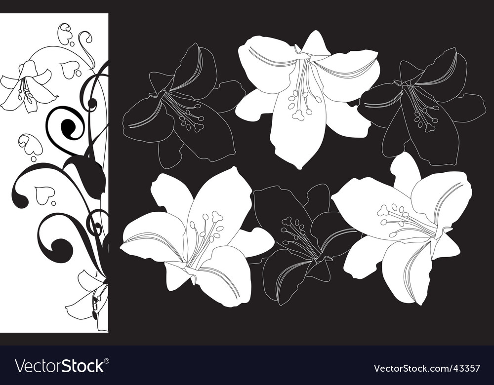 Lilies on a black background vector | Price: 1 Credit (USD $1)