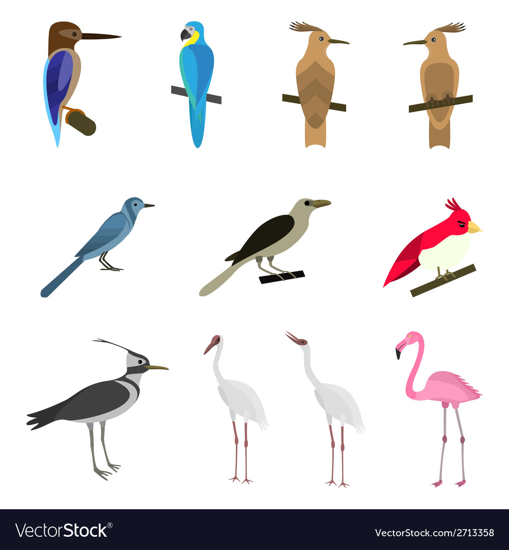 Set of beautiful birds vector | Price: 1 Credit (USD $1)