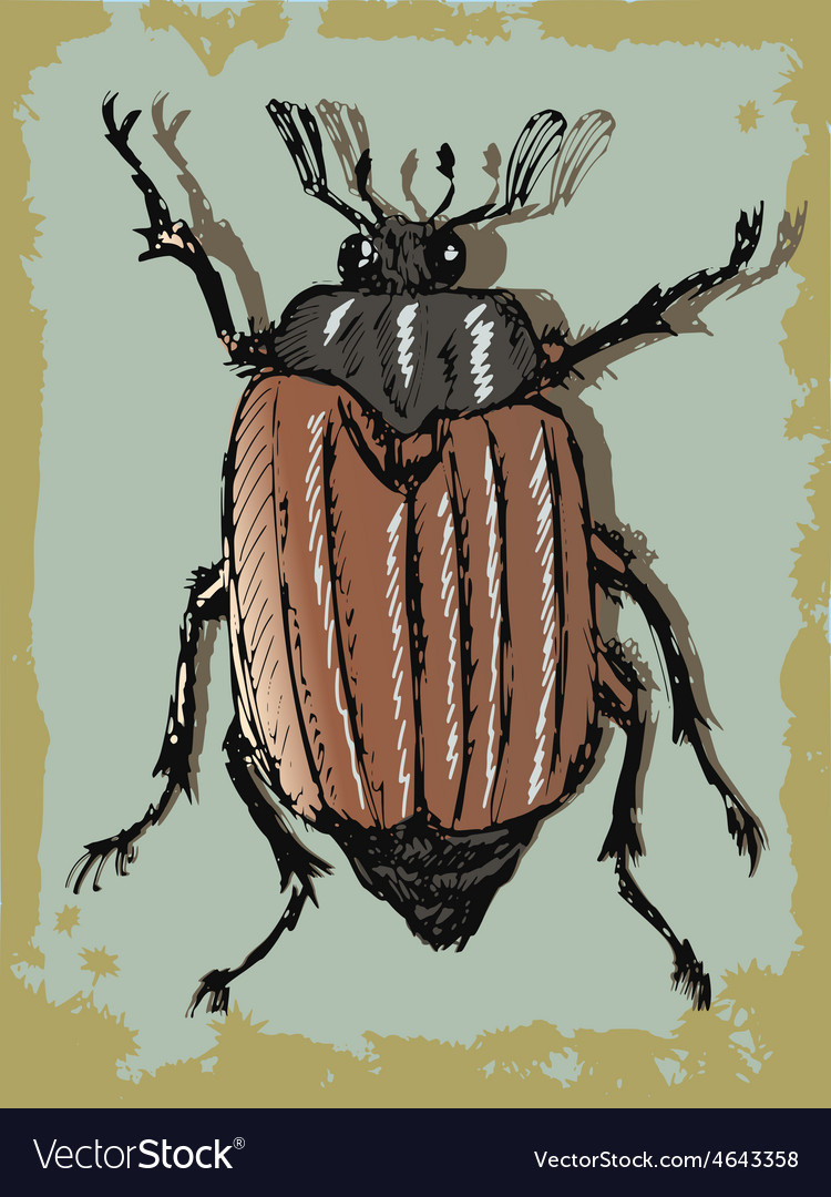 Vintage background with beetle vector | Price: 1 Credit (USD $1)