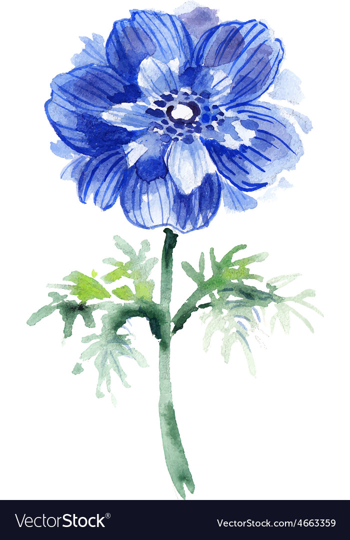 Blue watercolor anemone  beautiful flower vector | Price: 1 Credit (USD $1)