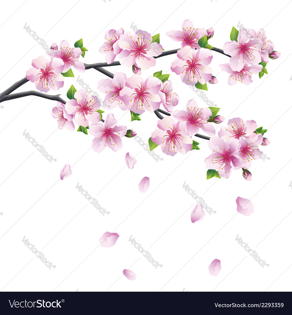Branch of sakura blooming japanese cherry tree vector | Price: 1 Credit (USD $1)