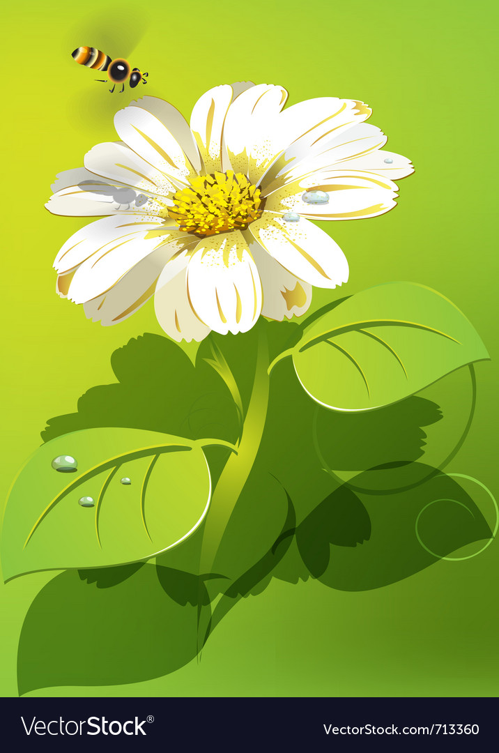 Bee flying to white flower vector | Price: 3 Credit (USD $3)