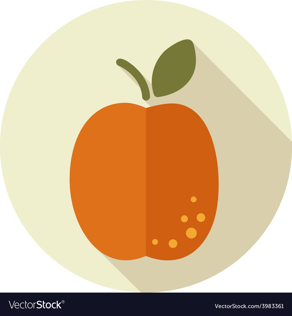 Apricot flat icon with long shadow vector | Price: 1 Credit (USD $1)