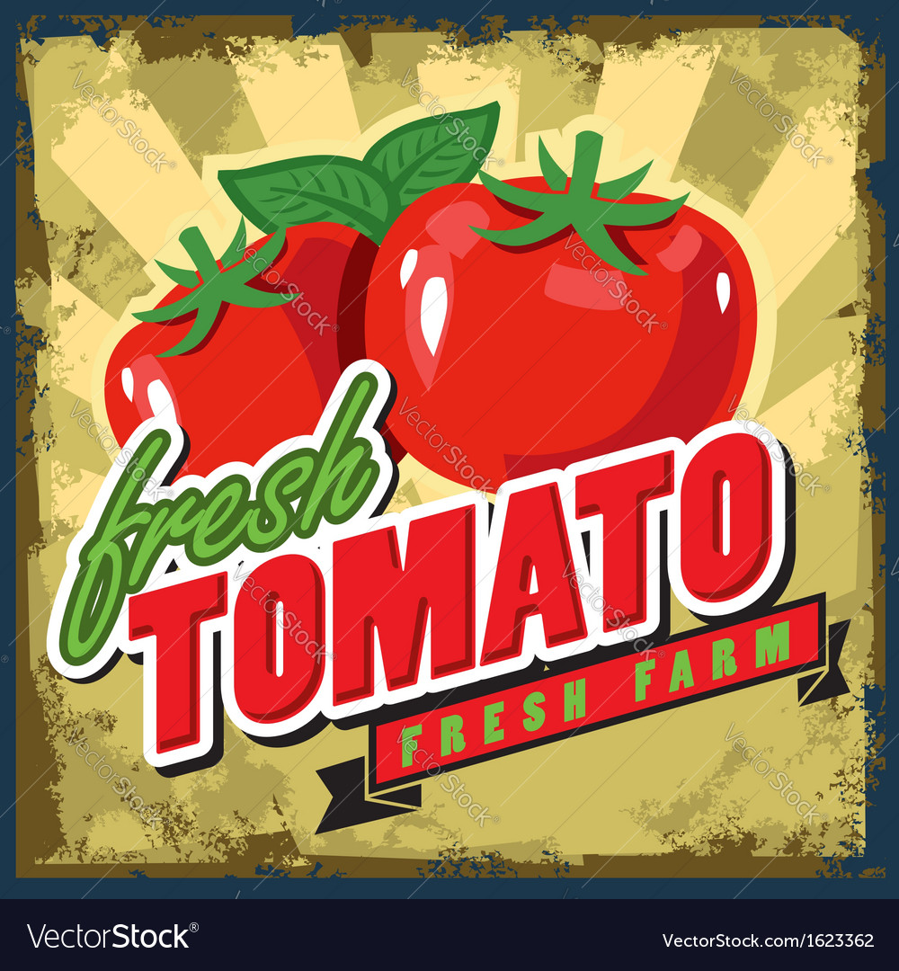Vintage tomato vector | Price: 1 Credit (USD $1)
