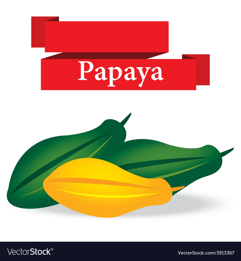 Fresh papaya on white background vector | Price: 1 Credit (USD $1)