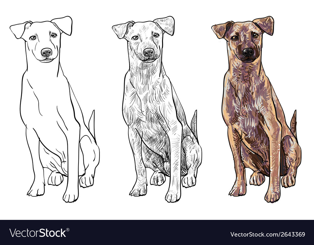 Sitting brown dog vector | Price: 1 Credit (USD $1)