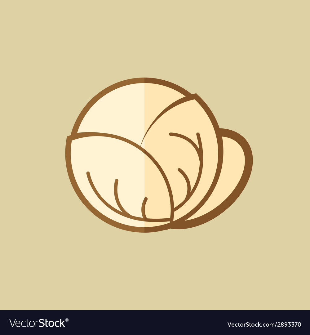 Cabbage food flat icon vector | Price: 1 Credit (USD $1)