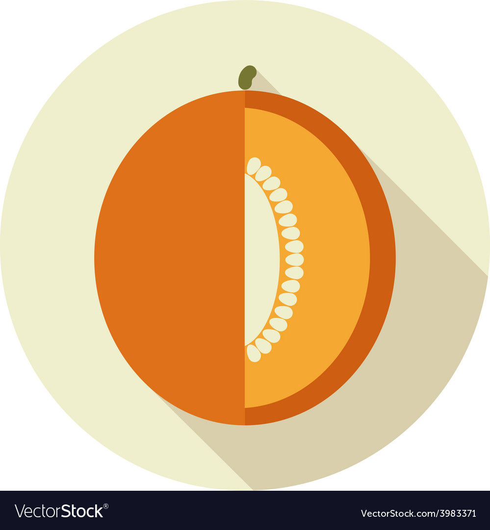 Melon flat icon with long shadow vector | Price: 1 Credit (USD $1)