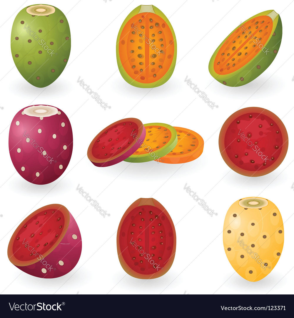 Prickly pear vector | Price: 1 Credit (USD $1)
