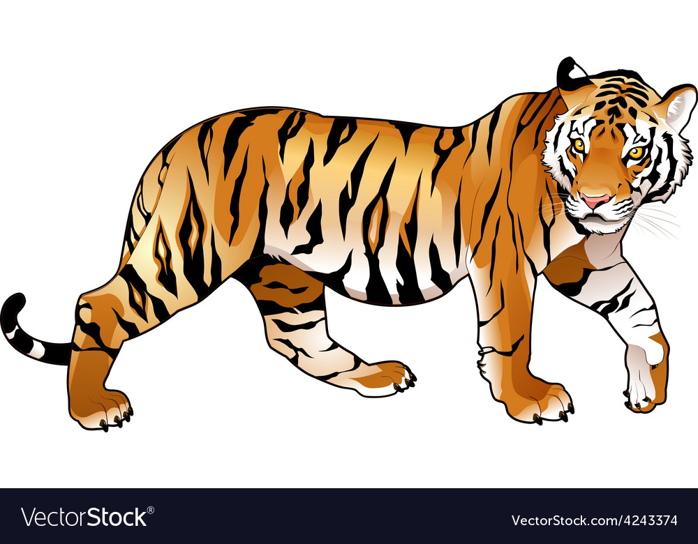Red tiger vector | Price: 1 Credit (USD $1)