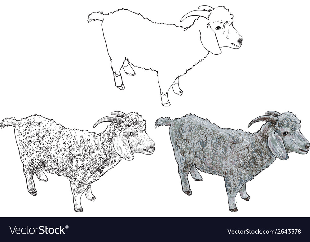 Angora goat- vector | Price: 1 Credit (USD $1)