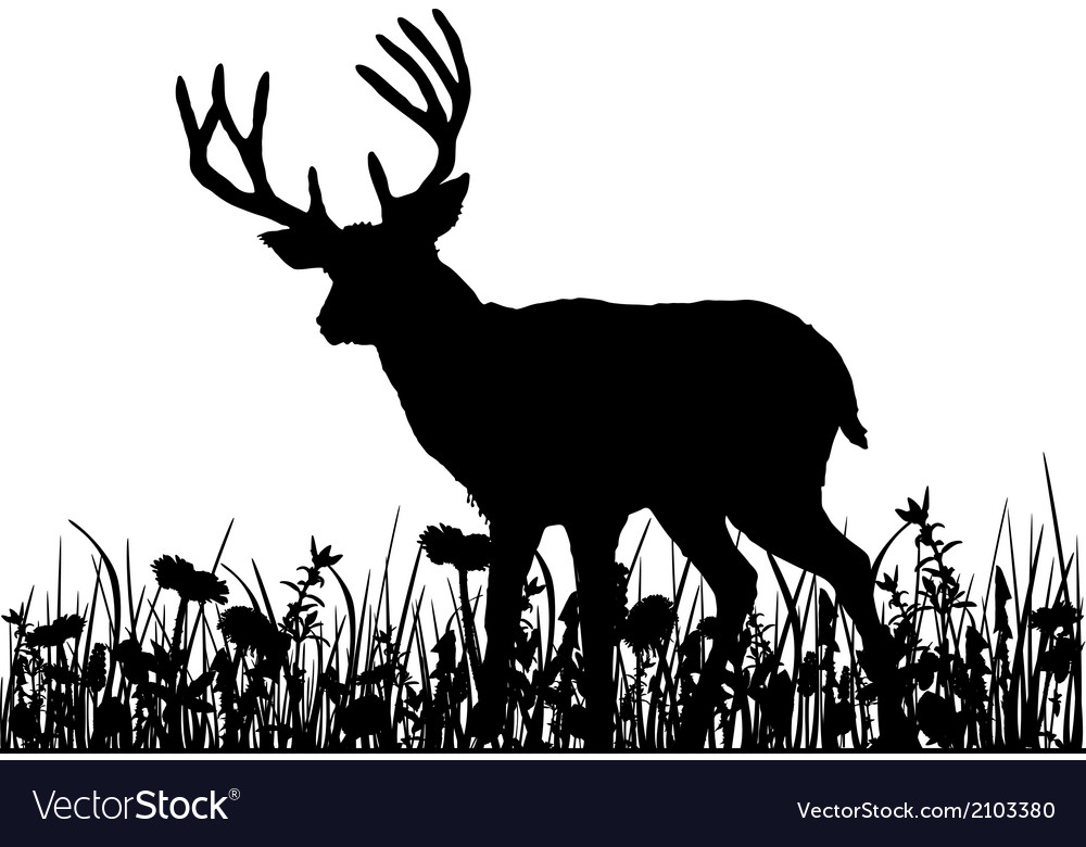Deer in the meadow vector | Price: 1 Credit (USD $1)