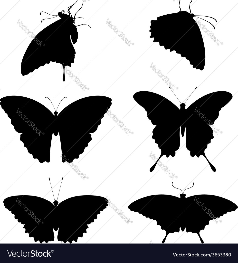 Silhouettes butterflies vector | Price: 1 Credit (USD $1)