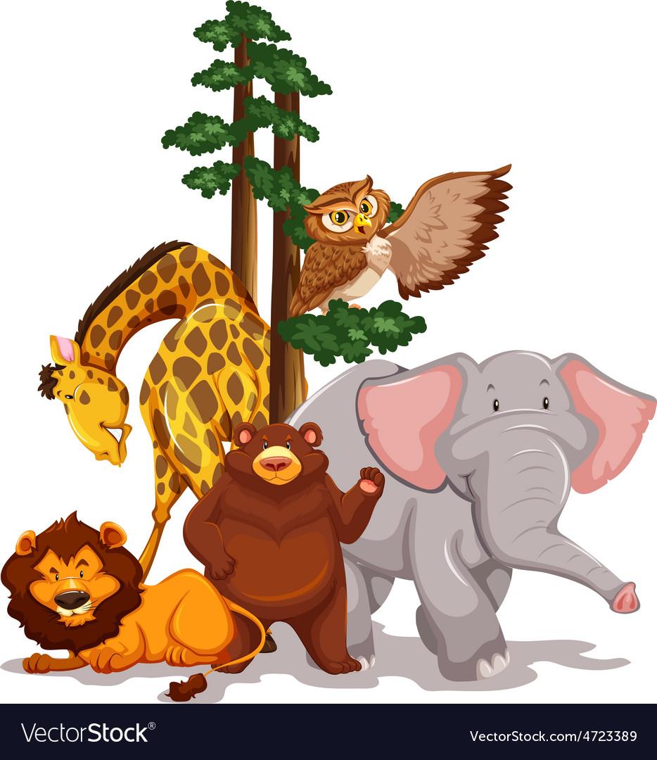 Wildlife vector | Price: 3 Credit (USD $3)