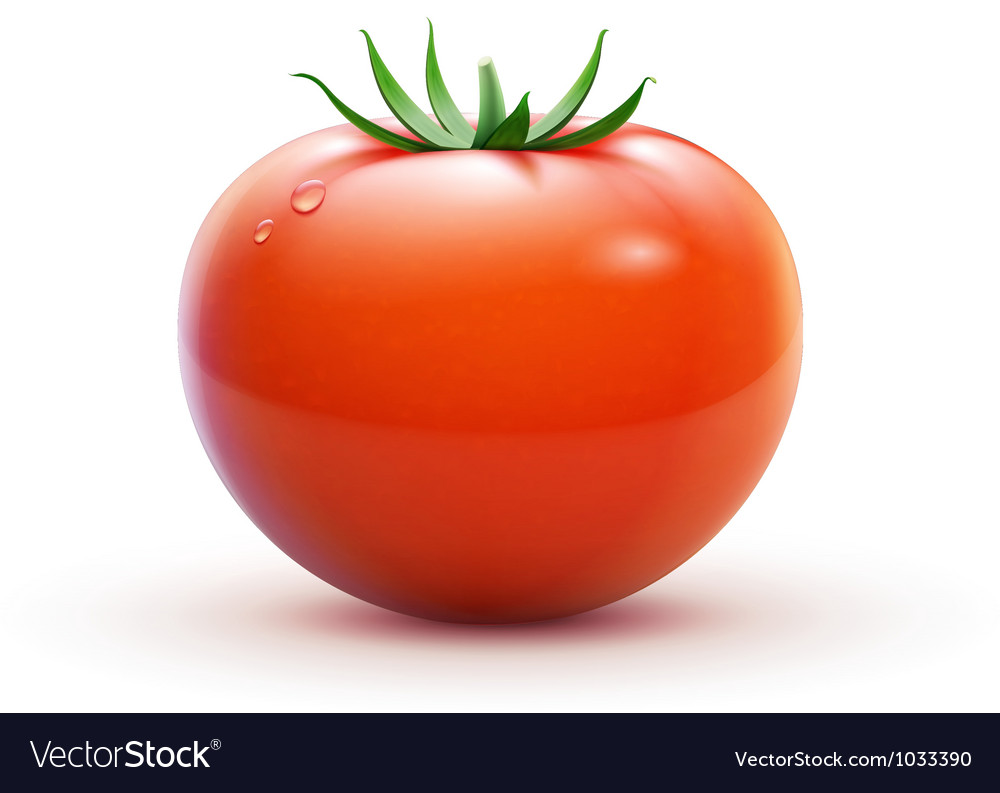 Red fresh tomato vector | Price: 3 Credit (USD $3)
