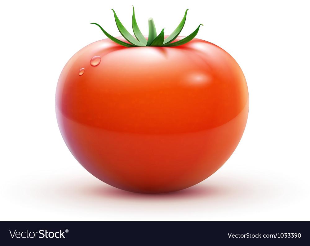 Red fresh tomato vector | Price: 3 Credit (USD $3)