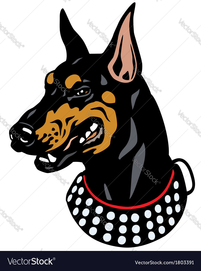 Doberman head vector | Price: 1 Credit (USD $1)
