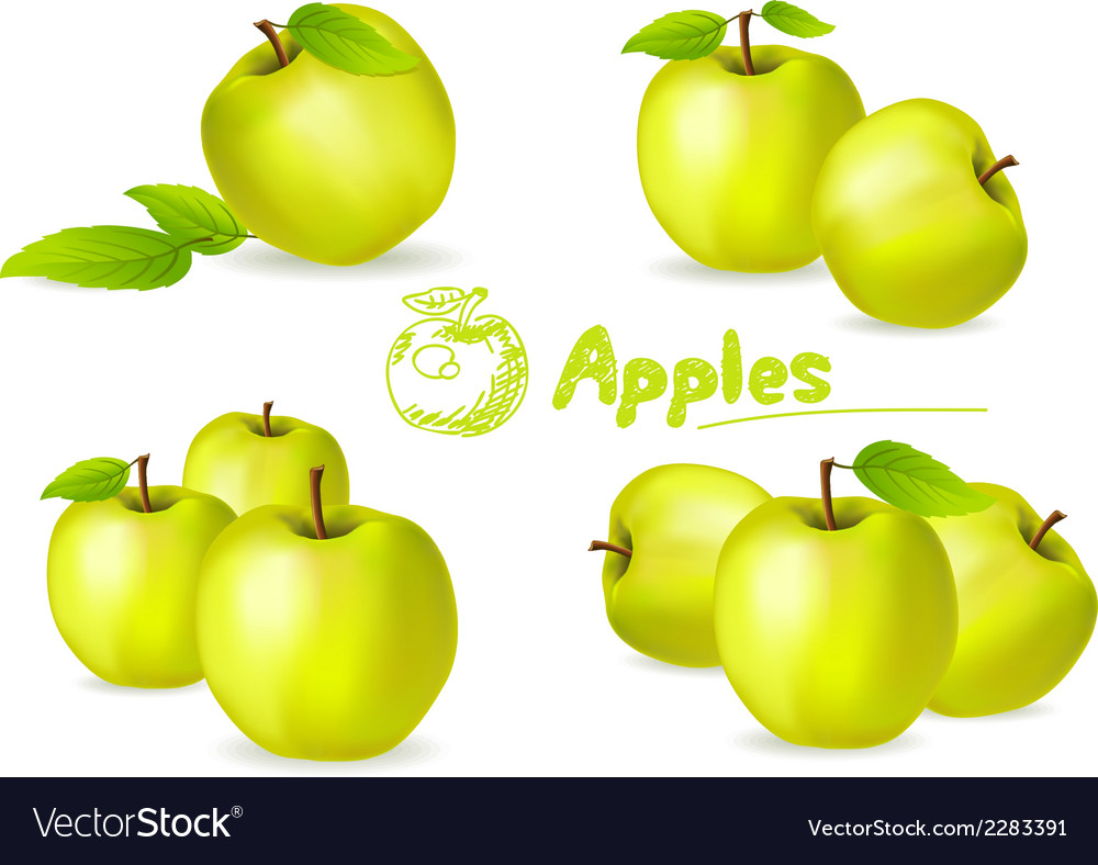 Green apples vector | Price: 1 Credit (USD $1)