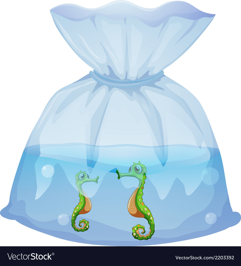 A pouch with seahorses vector | Price: 1 Credit (USD $1)