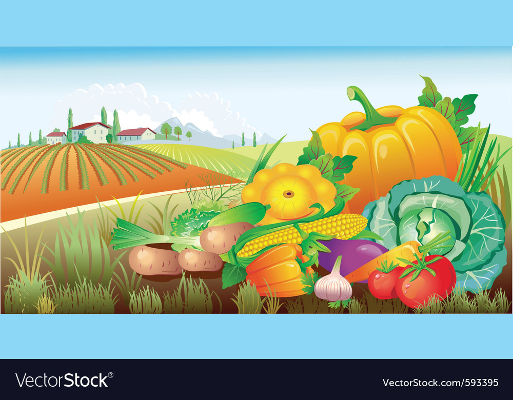 Landscape with a group of vegetables vector | Price: 3 Credit (USD $3)
