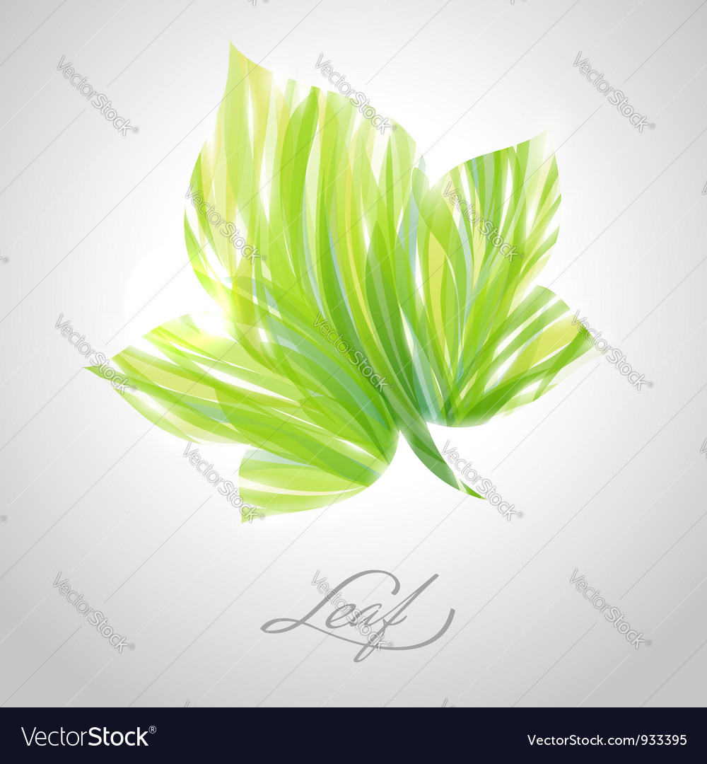 Shiny green striped maple leaf vector | Price: 1 Credit (USD $1)