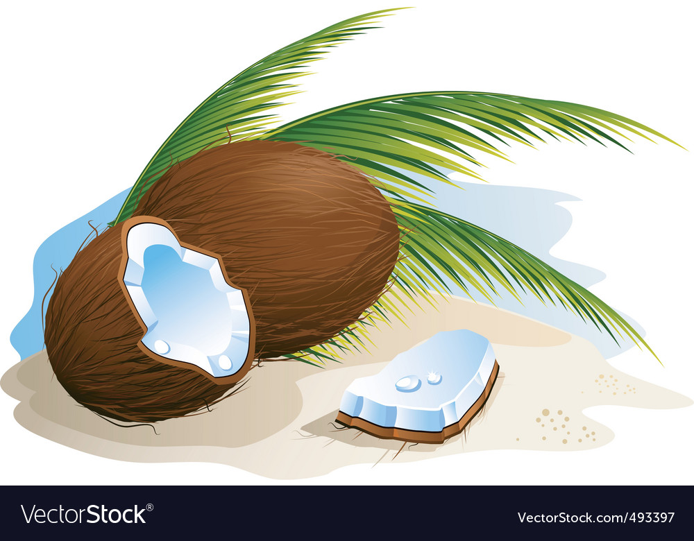 Coconut vector | Price: 1 Credit (USD $1)