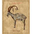 Watercolor painting of ornamental decorative goat vector