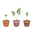 Three evergreen plants in ceramic flower pots vector