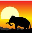 Africa sunset elephant vector