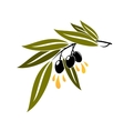 Black olives on a branch dripping olive oil vector