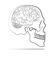 Skull with brain vector