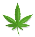 Cannabis leaf icon vector