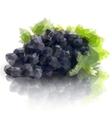Sprig of grapes triangle design vector