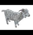 Angora goat- vector