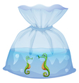 A pouch with seahorses vector