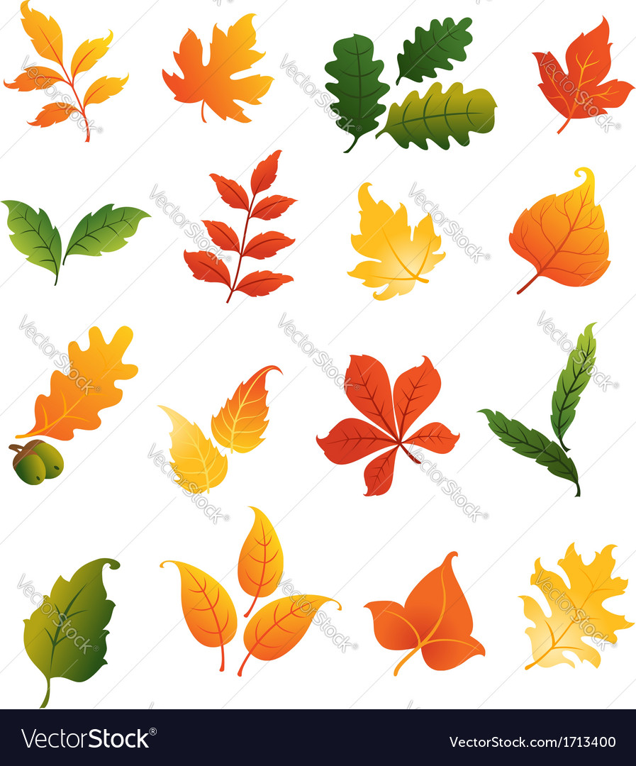 Colourful autumnal leaves set vector | Price: 1 Credit (USD $1)