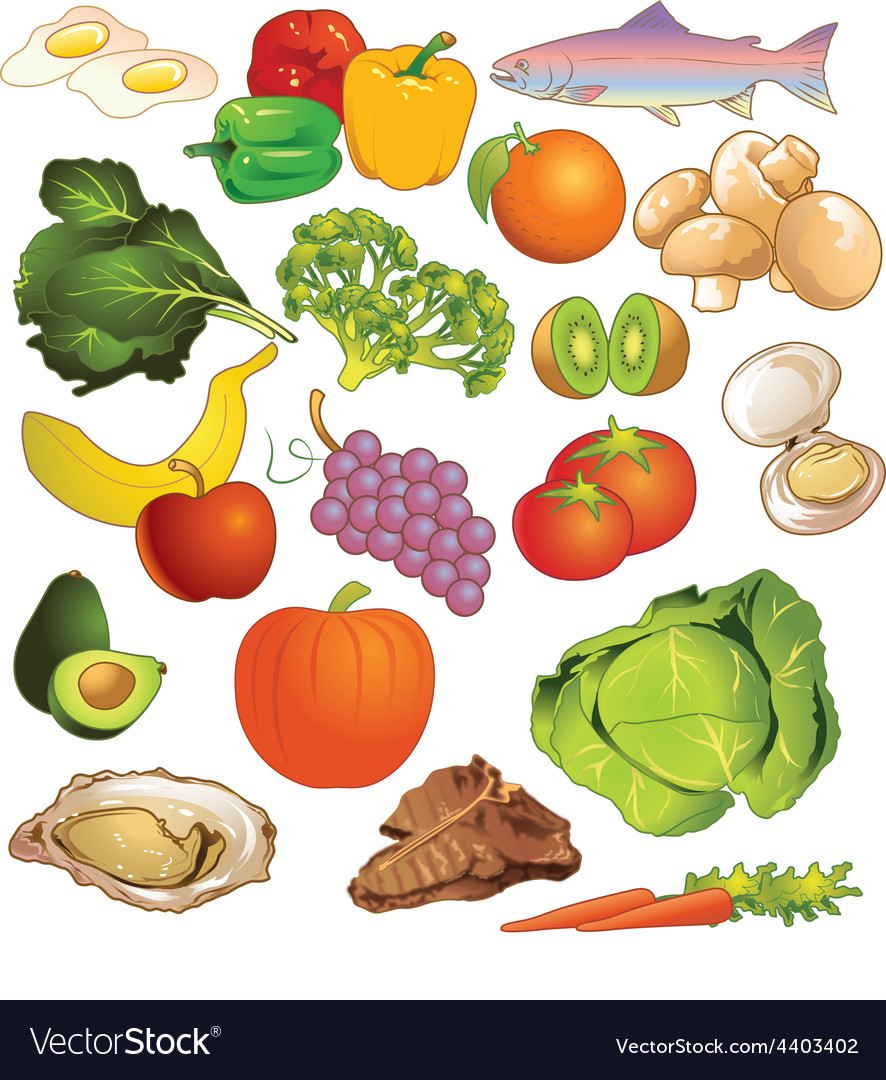Variety of different kinds of nutritious foods vector | Price: 3 Credit (USD $3)
