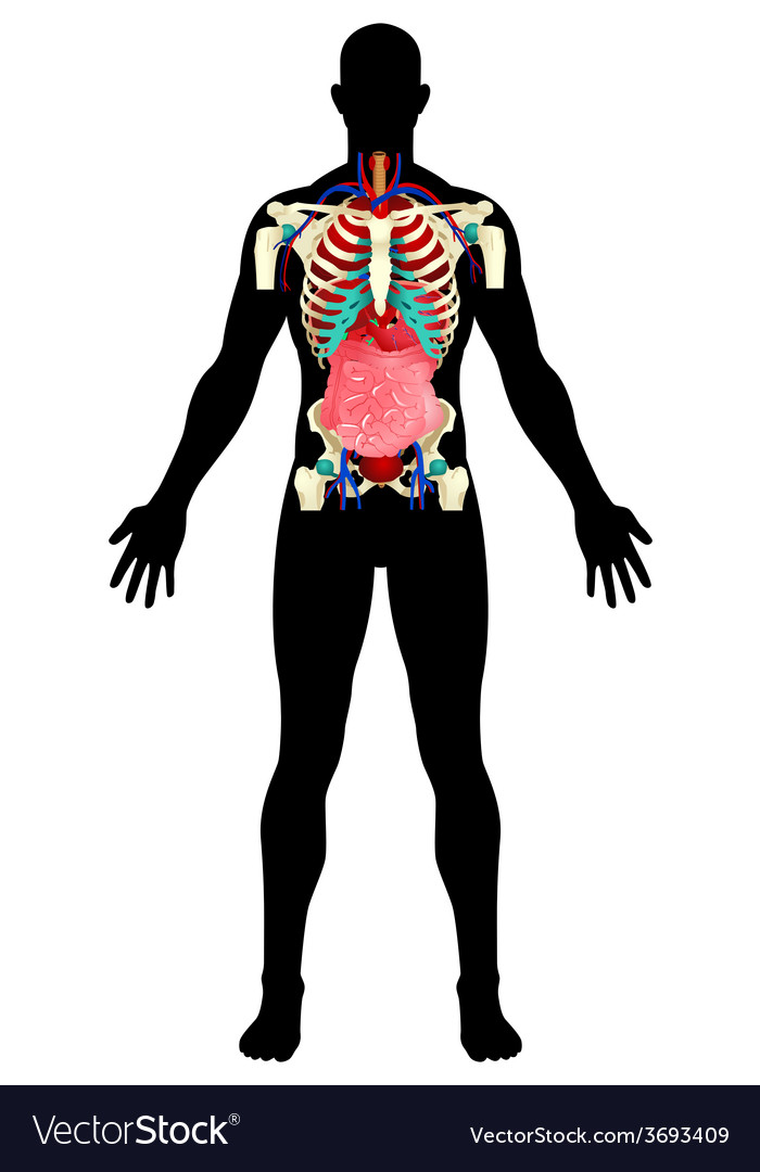 Human organs vector | Price: 3 Credit (USD $3)