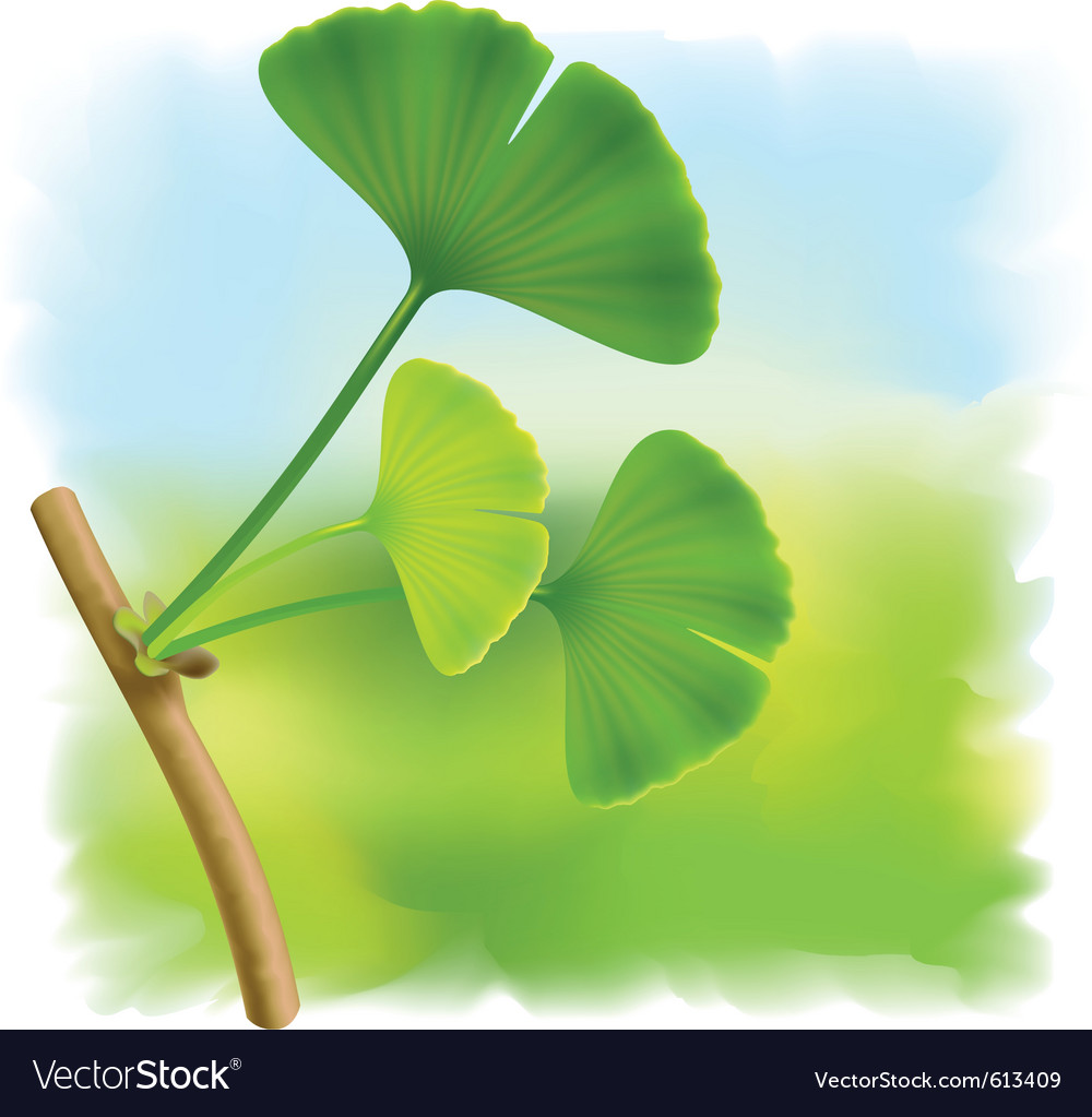 Twig with leaves of ginkgo biloba on fullcolor bac vector | Price: 1 Credit (USD $1)