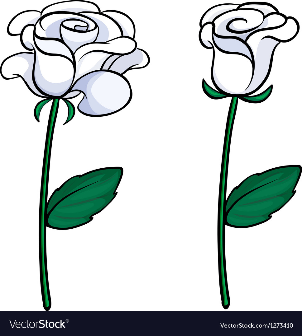 Two white roses vector | Price: 1 Credit (USD $1)