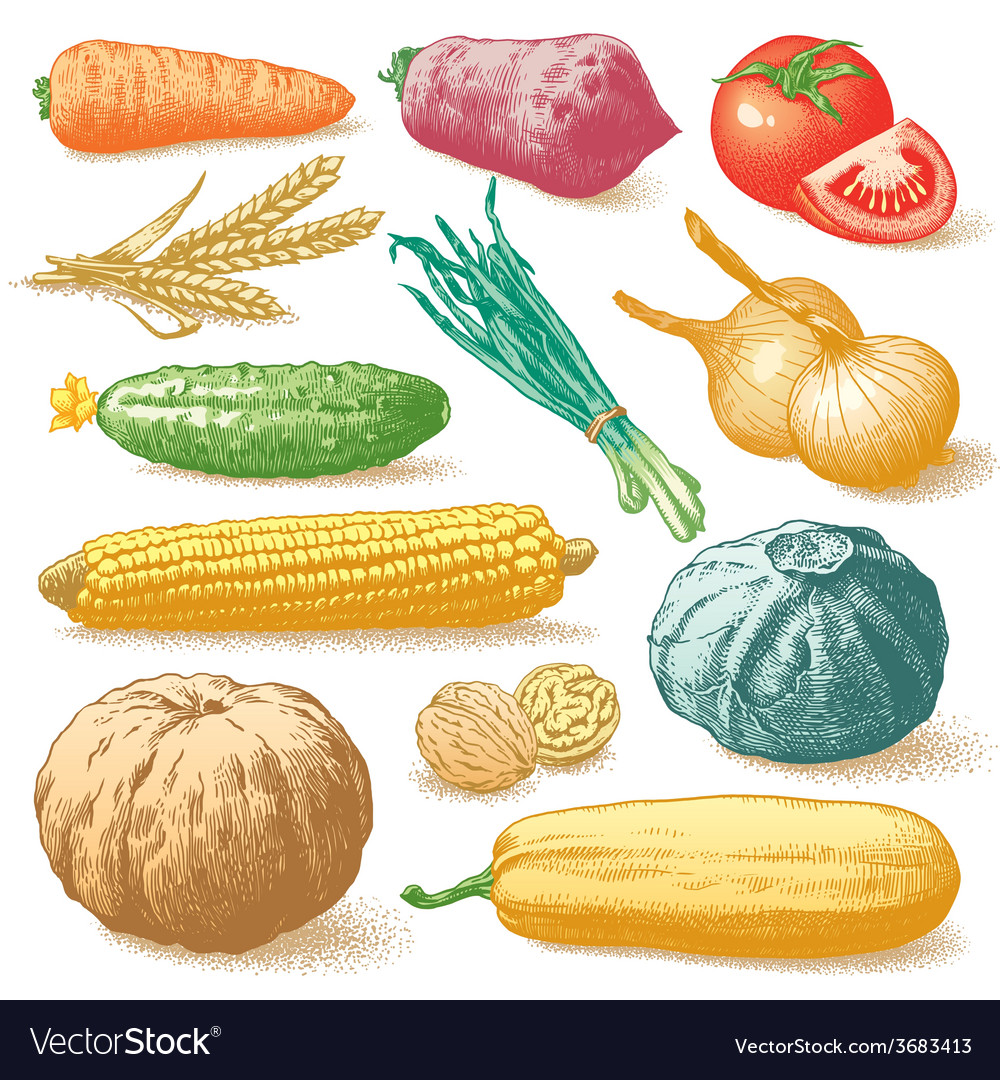 Vegetables fruits and plants hand drawn vector | Price: 1 Credit (USD $1)