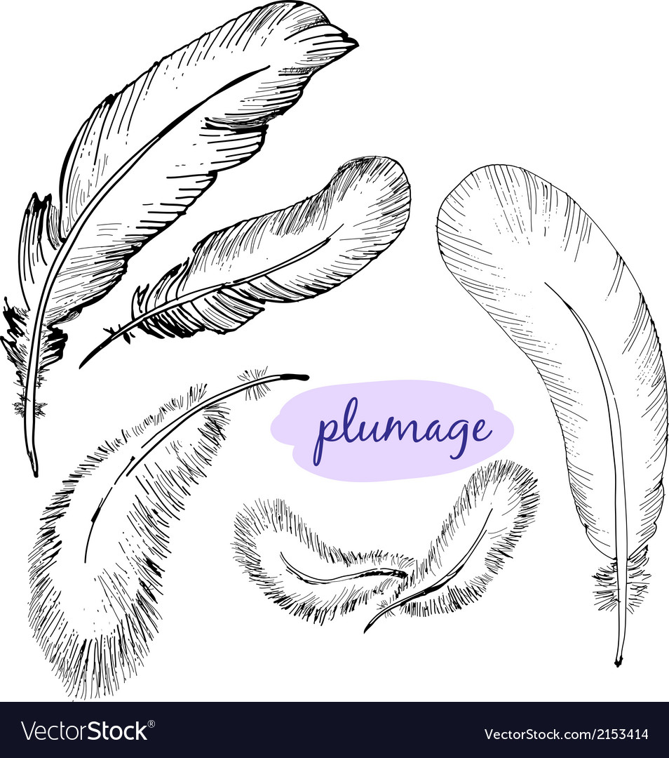 Set of sketch plumage vector | Price: 1 Credit (USD $1)