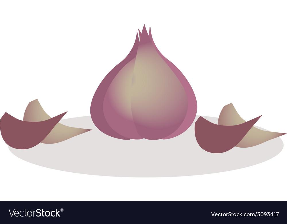 Garlic vector   Price: 1 Credit (USD $1)