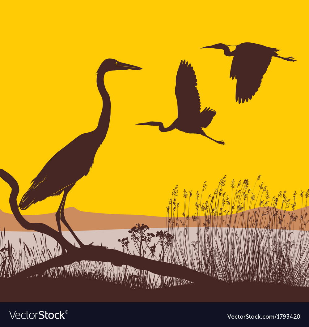 Herons at sunrise vector | Price: 1 Credit (USD $1)