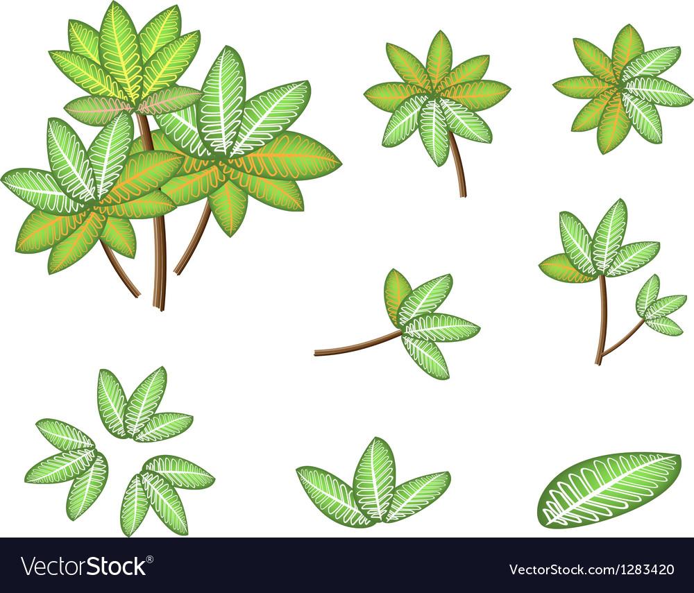 Isometric dieffenbachia picta marianne plant vector | Price: 1 Credit (USD $1)