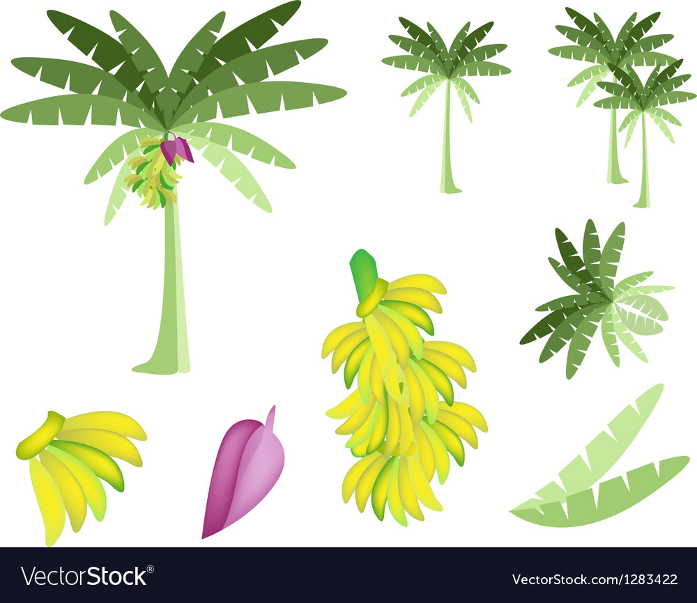 Set of banana tree with bananas and blossom vector | Price: 1 Credit (USD $1)