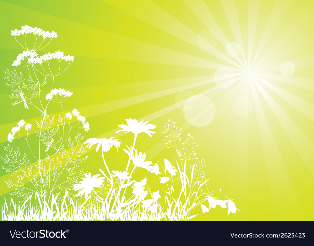 Sunny meadow vector | Price: 1 Credit (USD $1)