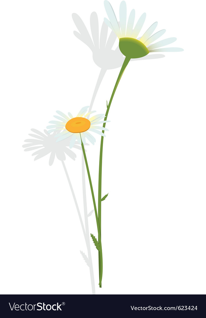 Chamomile flower vector | Price: 1 Credit (USD $1)
